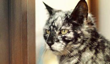 Кот с мраморным окрасом: удивительное преображение