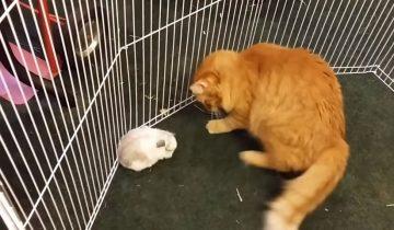 Кошка по имени Манго — хорошая мама не только для котят (2,7 млн просмотров)