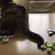 Кот, который крутит спиннер, стал героем интернета