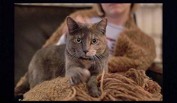 10 способов, которыми кошки выражают свою любовь