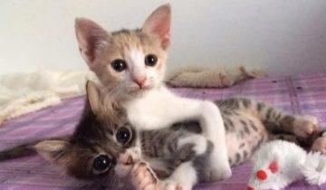 Крошки-сестрички спасли собственного братика-котенка