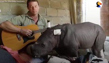 Он начал играть колыбельную носорогу, которому исполнился всего один день