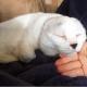 Девушка спасла безухого кота, которого никто не хотел забирать (10 фото)