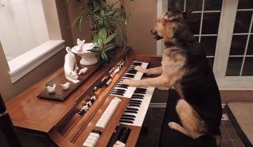 Эти умные и талантливые собаки изумляют (1 млн просмотров)