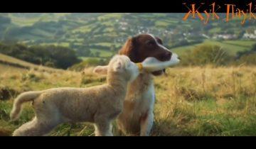 7 невероятных случаев взаимовыручки животных
