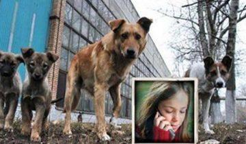«Мы кричали, но люди разбегались…» Девочек спасла стая бродячих собак