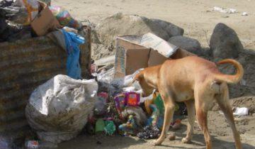 Когда люди увидели, ЧТО нашла собака на мусорке, они были в шоке