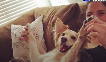 Ветеринары утверждали, что эта собака никогда не будет ходить