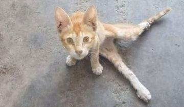 После аварии котенок потерял лапку, но обрел семью