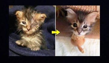 Одноглазого котенка обнаружили в почтовом ящике (9 фото)