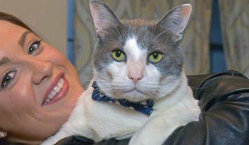 Кот стал приемным отцом для 25 котят
