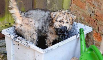 Никогда не подпускайте собаку к грязи!