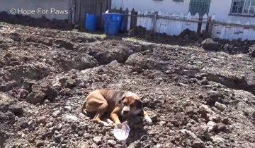 Брошенный пес так боялся, что прижался к земле и не шевелился