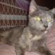 Когда эту 15-летнюю кошку забирали из приюта, персонал не сдерживал слез (7 фото)