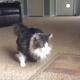 Передние лапки у этого кота не работают с рождения