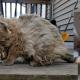 Чудесное преображение Фрисби: из замурзанного бродяжки в роскошного кота