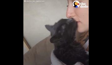 Кот, которому трудно ходить, стал самым любимым питомцем