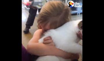 Три года в разлуке! Девочка встречается с пропавшим котом