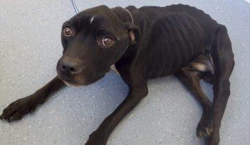 Бессердечный хозяин довел пса до истощения: «кожа да кости», сказали о нем в суде