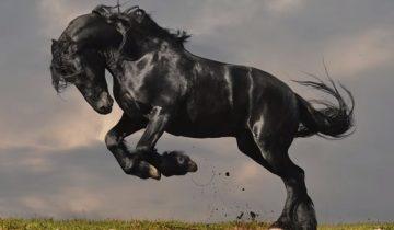 5 пород лошадей, в существование которых сложно поверить