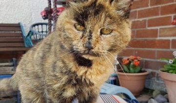 Знакомьтесь, это самая старая кошка в мире: ей 31 или 141 по человеческим меркам