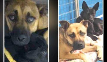 Для неразлучной пары собак ищут любящего хозяина