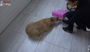 Приютская собака получила посылку от новой хозяйки