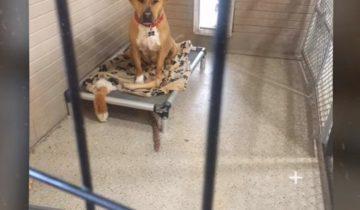 Больше 2,5 лет этот пес ждет, чтоб его забрали в любящую семью