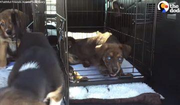 В один миг эти щенки остались без мамы: ее сбила машина
