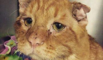 Пара взяла домой самого грустного кота. Как он изменился всего через час! (9 фото)
