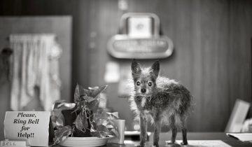 Невероятный проект фотохудожницы: портреты собак-старичков (9 снимков)