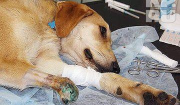 Спасение пса, который попался в капкан