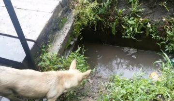 Мамаша-собака была в отчаянии: ее щенков заливало водой