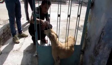 Застряв в заборе, бездомный пес мучился несколько часов