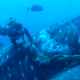 Ролик о спасении акулы собрал 1,8 млн просмотров