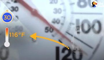 Что происходит, когда собаку оставляют на полчаса в машине в жару