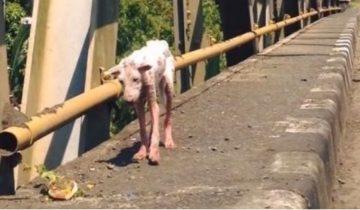 Находясь на грани жизни и смерти, собака доверилась человеку