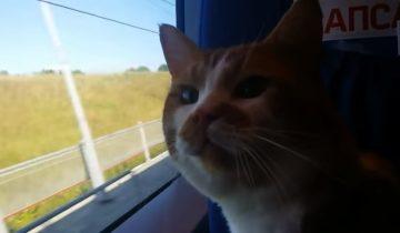Знаменитый кот Борис может стать звездой ТВ