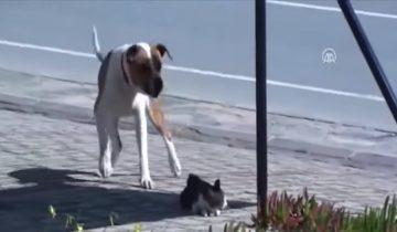 Этот пес спас раненого кота и стал героем интернета (1,2 млн просмотров)