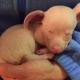 Слепой и глухой: этот щенок оказался не нужен даже собственной матери