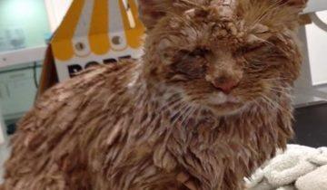 Негодяи облили этого кота цементным раствором
