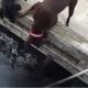 Выдра нашла в этих собаках лучших друзей