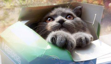 Какая кошка не полезет в коробку? Только неправильная кошка