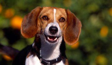 Они наконец обрели свои дома: реакция собак на новых хозяев