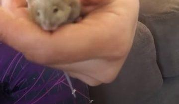 Женщина спасла мышку, зацепившуюся за проволоку
