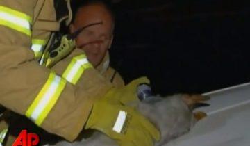 Пес спас котят от огня, прикрыв их собственным телом