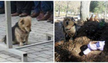 Каждое утро пес убегал от нового хозяина непонятно куда