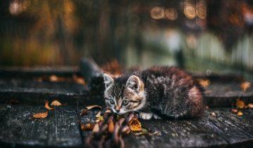 Горячо любимый кот забрал болезнь хозяина и умер