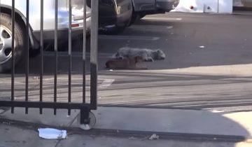 Двух бездомных собак разделили во время операции по спасению