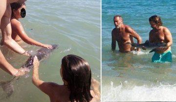 Детеныш дельфина умер после фотосессии на пляже в Испании